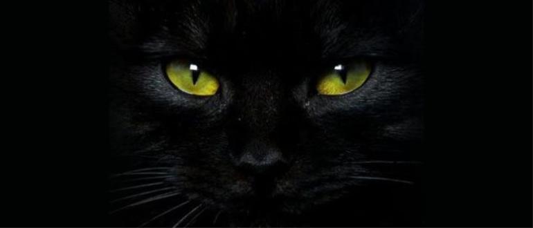 O SÉTIMO GUARDIÃO gato-preto-632x271